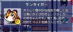 とら2.JPG